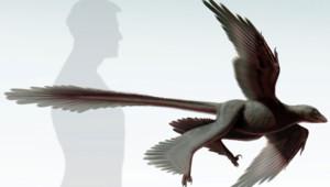Avec ses 4,5 kg, il est le plus gros dinosaures à quatre ailes.