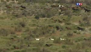 Le 20 heures du 25 avril 2014 : L'ouest des Etats-Unis envahi par%u2026 les chevaux sauvages - 1629.2455238647458