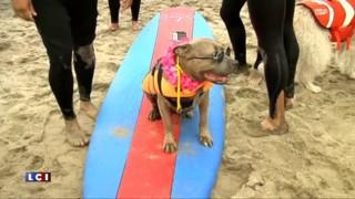 Quand chiens et surf font bon ménage...