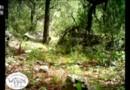 L'unique jaguar sauvage des Etats-Unis filmé pour la première fois