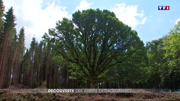 """Les arbres labellisés """"remarquables"""", un patrimoine vivant à préserver"""