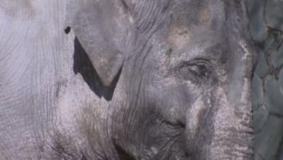 Le Japon se mobilise pour octroyer un monde meilleur au plus vieil éléphant du pays (04/02)