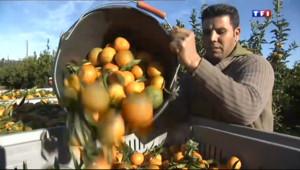 Le 13 heures du 24 décembre 2013 : La cl�ntine corse, un fruit du terroir - 1292.3519999999999