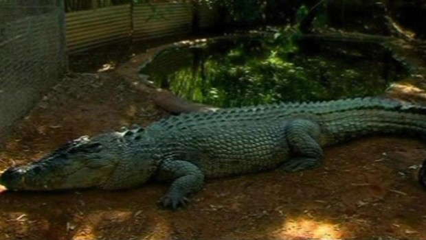 Crocodile australie